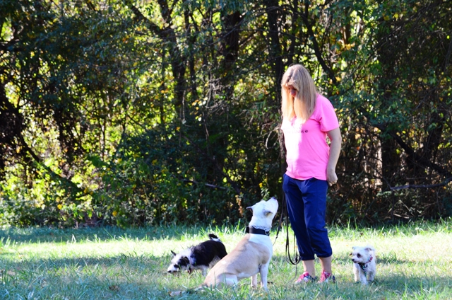 Dog Training Service